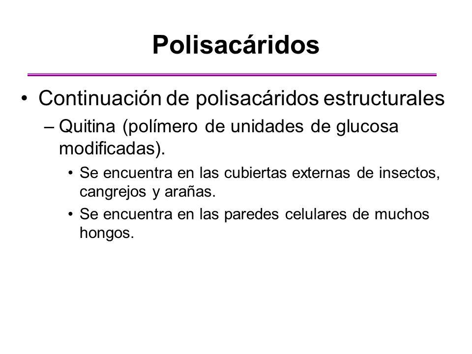 Polisacáridos Continuación de polisacáridos estructurales