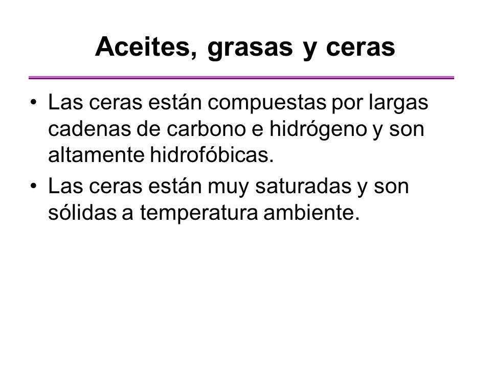 Aceites, grasas y ceras Las ceras están compuestas por largas cadenas de carbono e hidrógeno y son altamente hidrofóbicas.