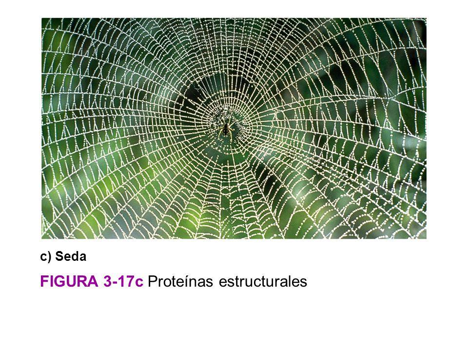 FIGURA 3-17c Proteínas estructurales