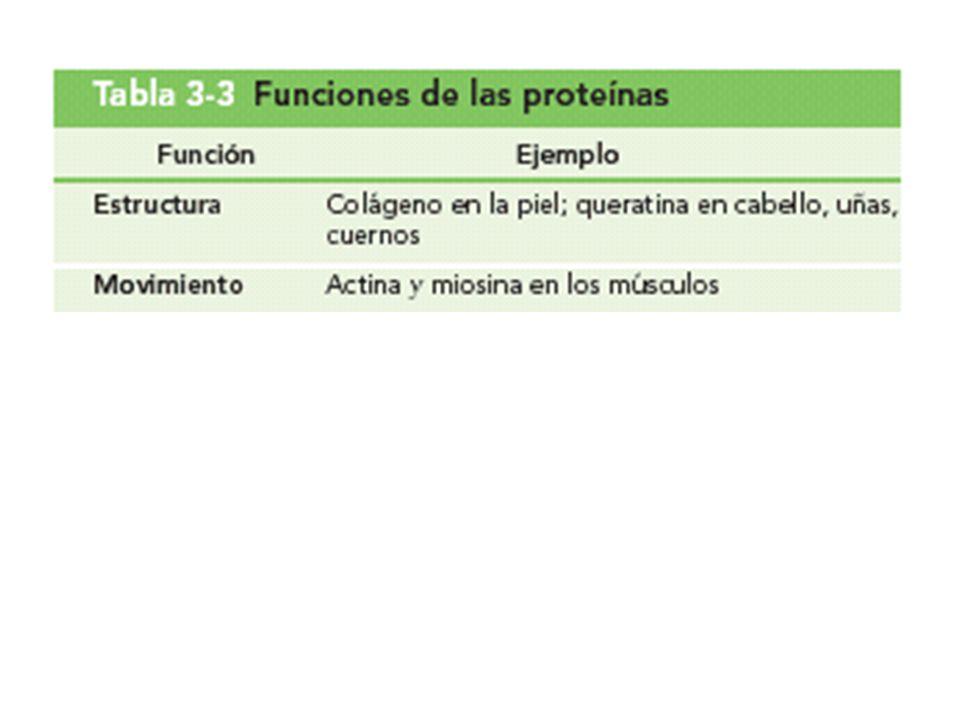 Tabla 3-3 Funciones de las proteínas
