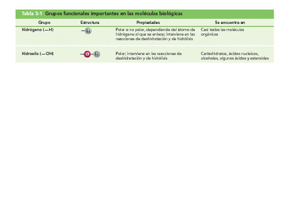 Tabla 3-1 Grupos funcionales importantes en las moléculas biológicas