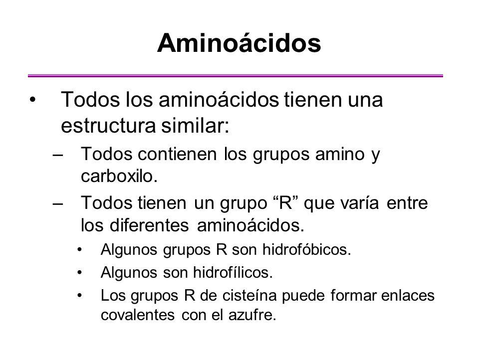 Aminoácidos Todos los aminoácidos tienen una estructura similar: