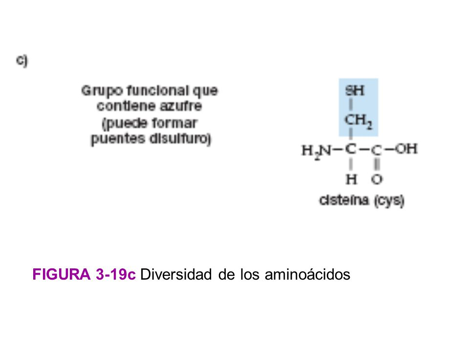 FIGURA 3-19c Diversidad de los aminoácidos