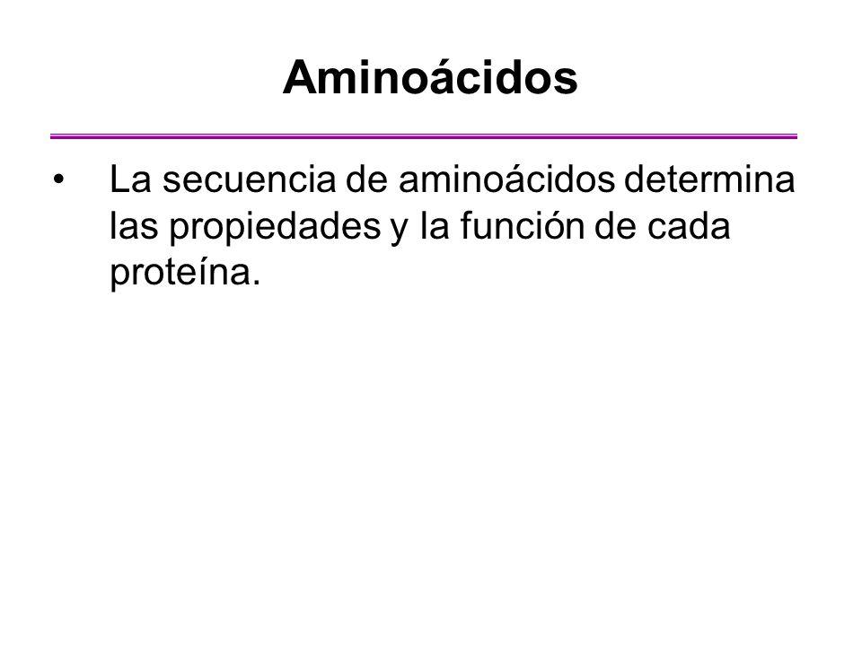 Aminoácidos La secuencia de aminoácidos determina las propiedades y la función de cada proteína.