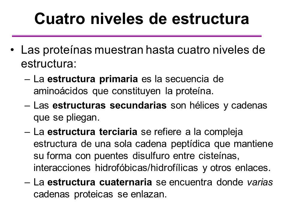 Cuatro niveles de estructura