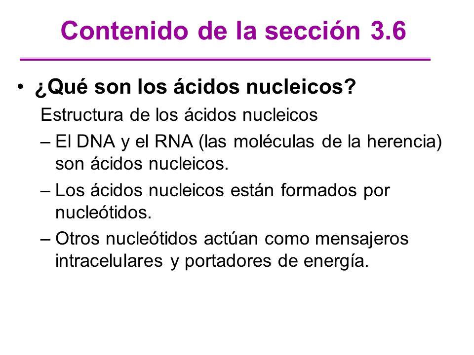 Contenido de la sección 3.6