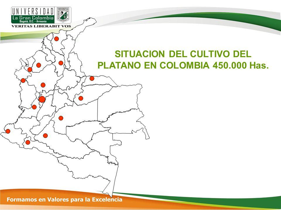 SITUACION DEL CULTIVO DEL PLATANO EN COLOMBIA 450.000 Has.