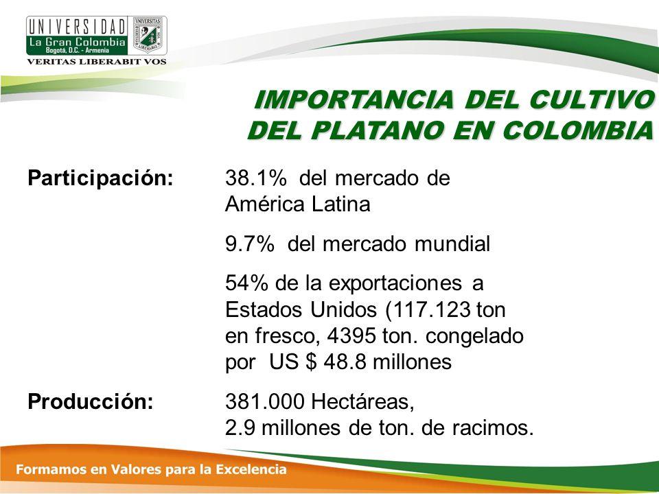IMPORTANCIA DEL CULTIVO DEL PLATANO EN COLOMBIA