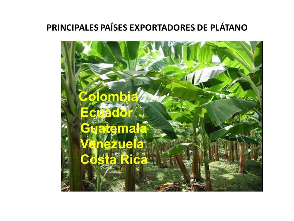 PRINCIPALES PAÍSES EXPORTADORES DE PLÁTANO