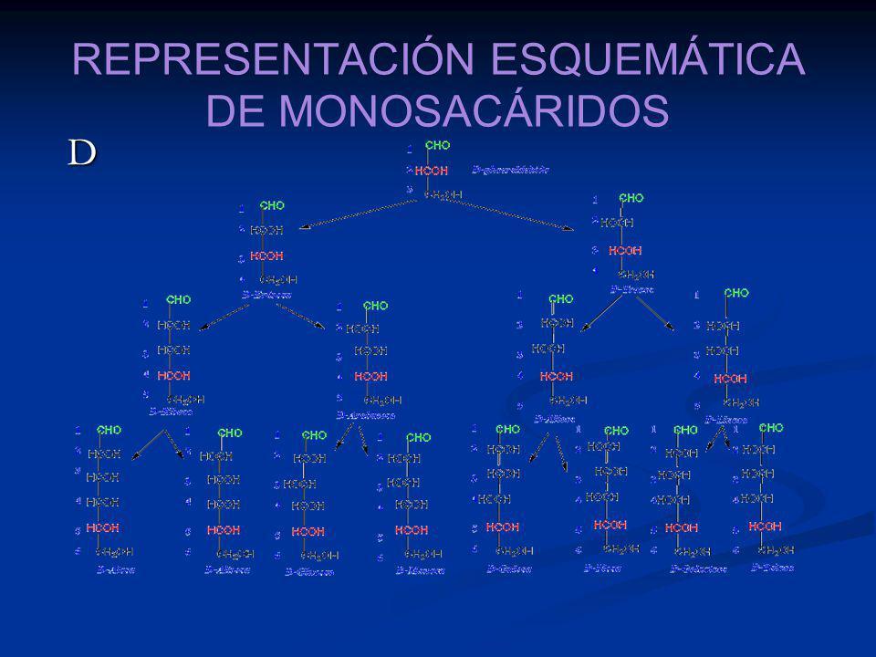 REPRESENTACIÓN ESQUEMÁTICA DE MONOSACÁRIDOS