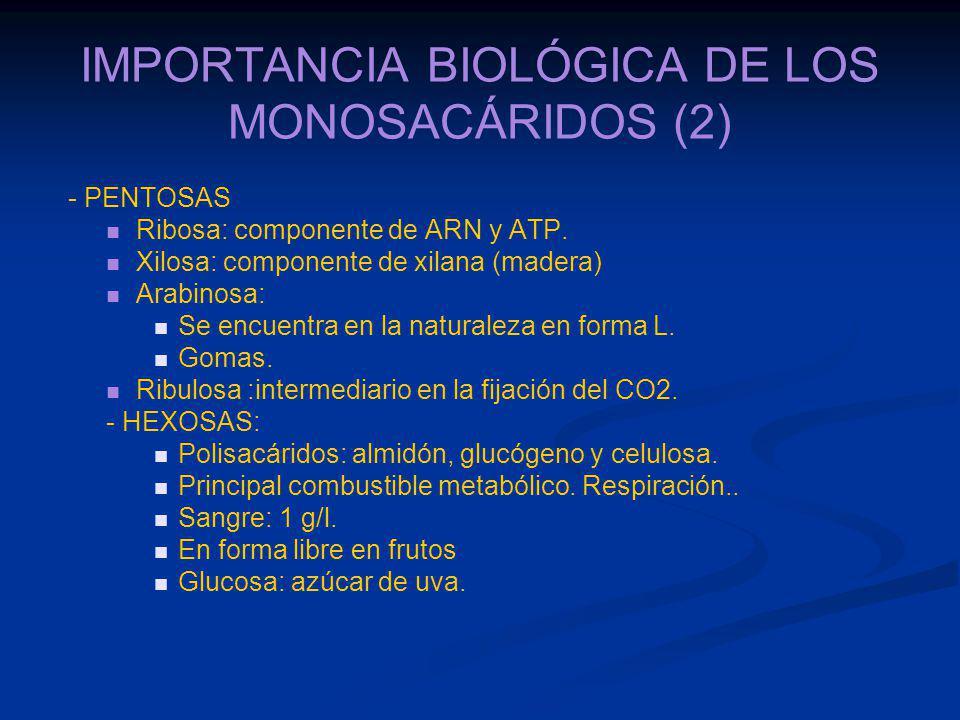 IMPORTANCIA BIOLÓGICA DE LOS MONOSACÁRIDOS (2)
