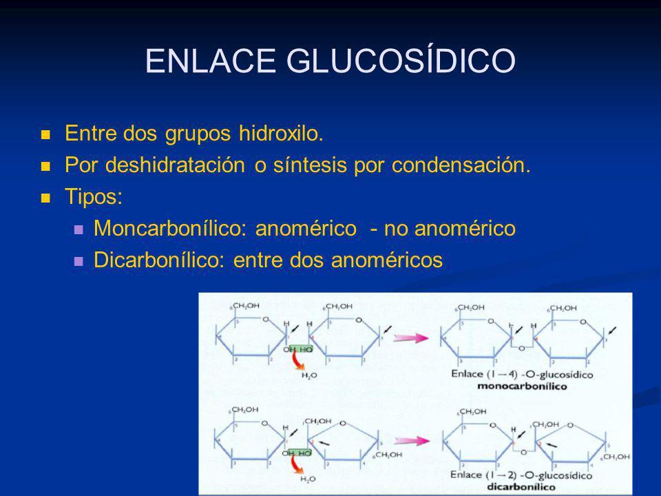 ENLACE GLUCOSÍDICO Entre dos grupos hidroxilo.