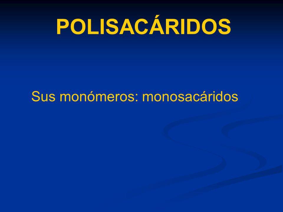 POLISACÁRIDOS Sus monómeros: monosacáridos