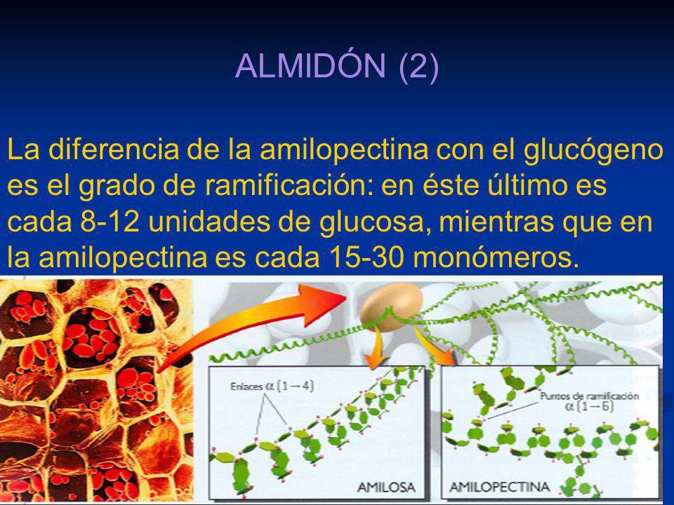ALMIDÓN (2)
