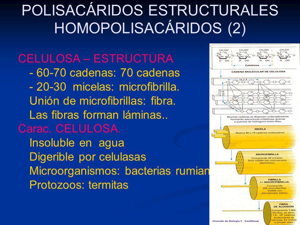 POLISACÁRIDOS ESTRUCTURALES HOMOPOLISACÁRIDOS (2)