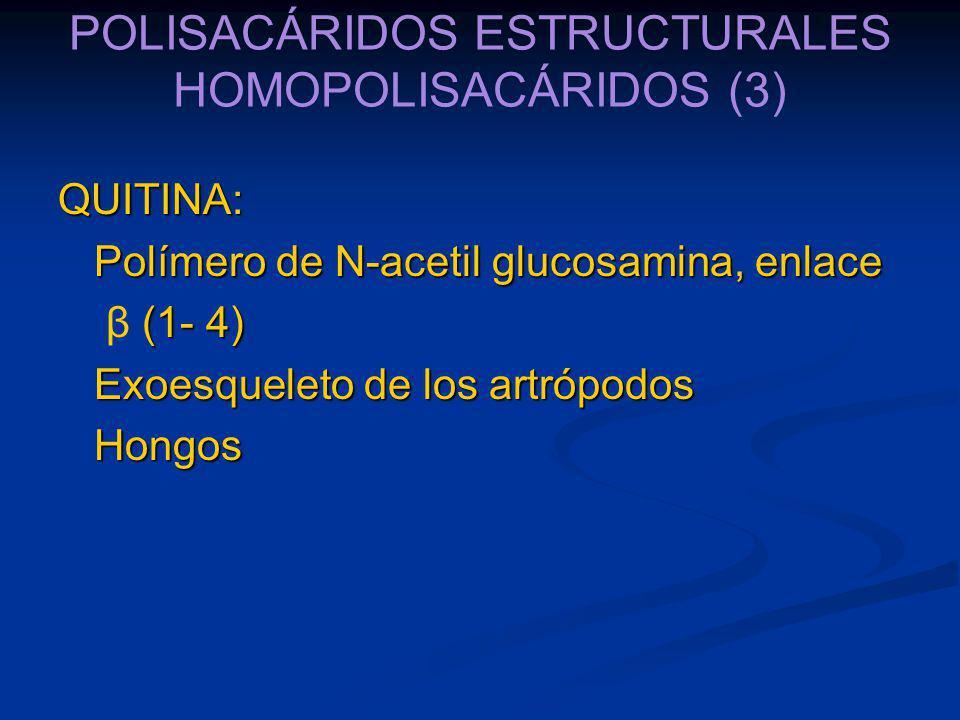 POLISACÁRIDOS ESTRUCTURALES HOMOPOLISACÁRIDOS (3)
