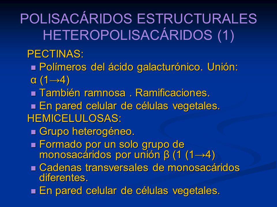 POLISACÁRIDOS ESTRUCTURALES HETEROPOLISACÁRIDOS (1)
