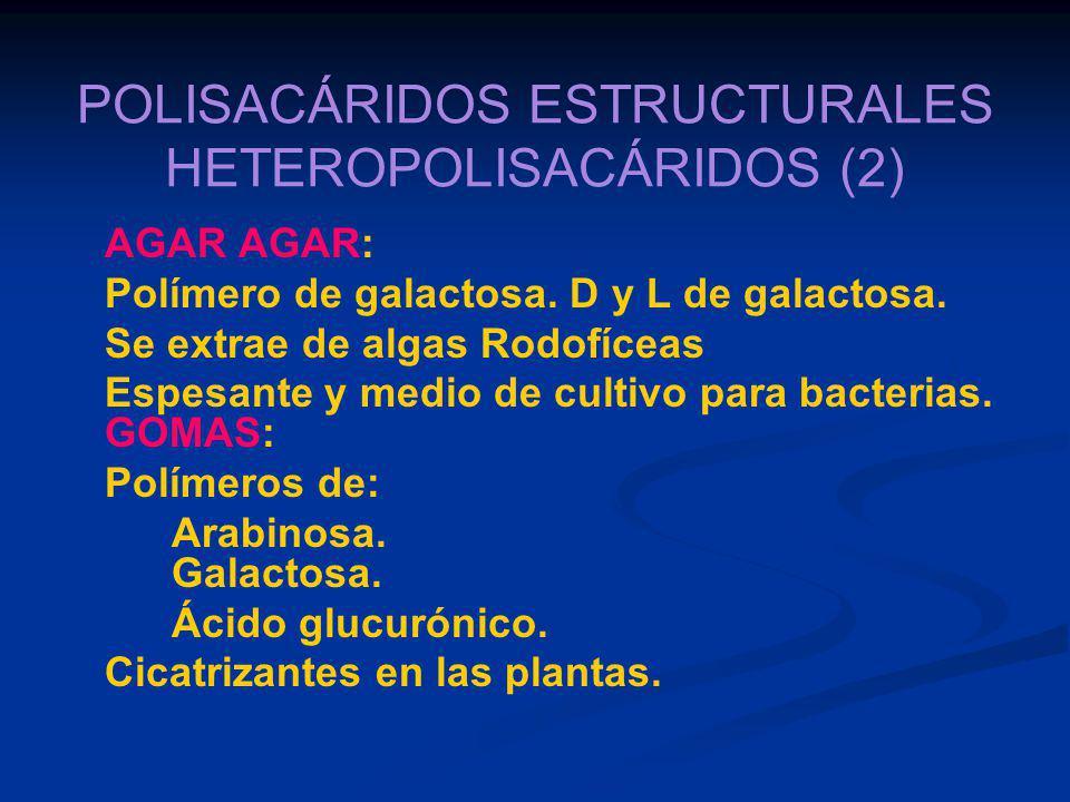 POLISACÁRIDOS ESTRUCTURALES HETEROPOLISACÁRIDOS (2)