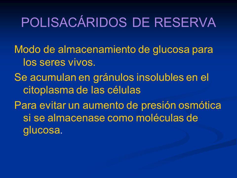 POLISACÁRIDOS DE RESERVA