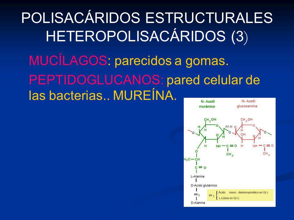 POLISACÁRIDOS ESTRUCTURALES HETEROPOLISACÁRIDOS (3)