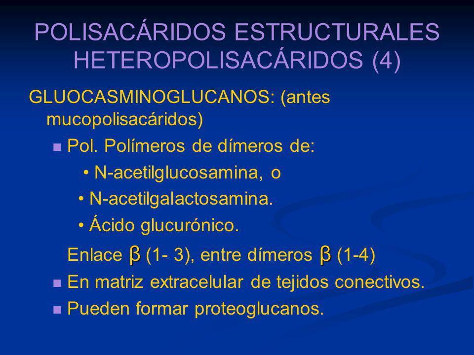 POLISACÁRIDOS ESTRUCTURALES HETEROPOLISACÁRIDOS (4)