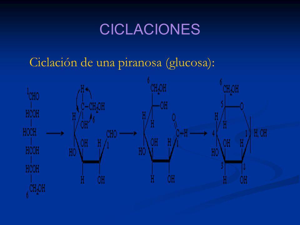CICLACIONES Ciclación de una piranosa (glucosa):