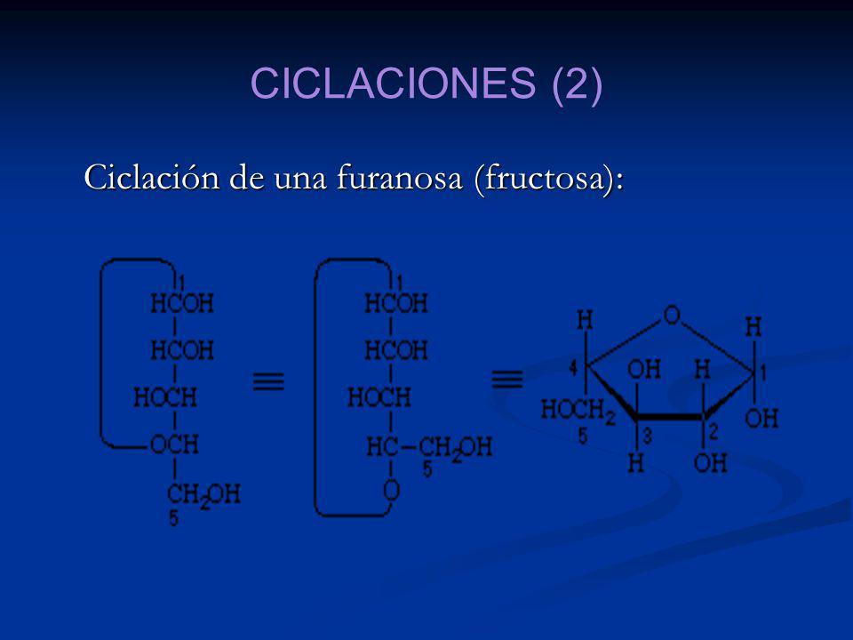 CICLACIONES (2) Ciclación de una furanosa (fructosa):