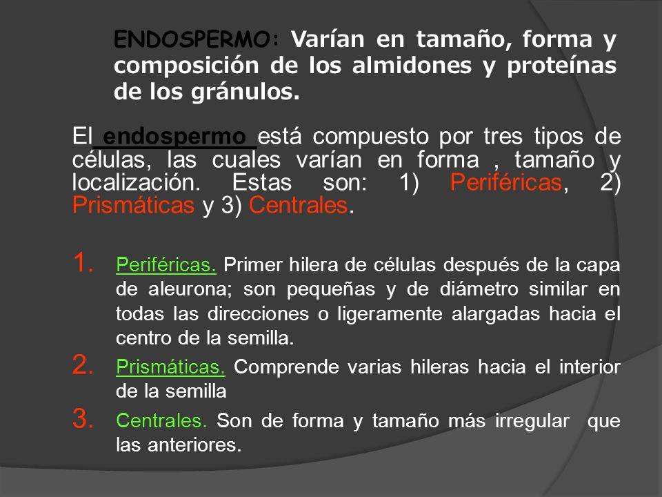 ENDOSPERMO: Varían en tamaño, forma y composición de los almidones y proteínas de los gránulos.