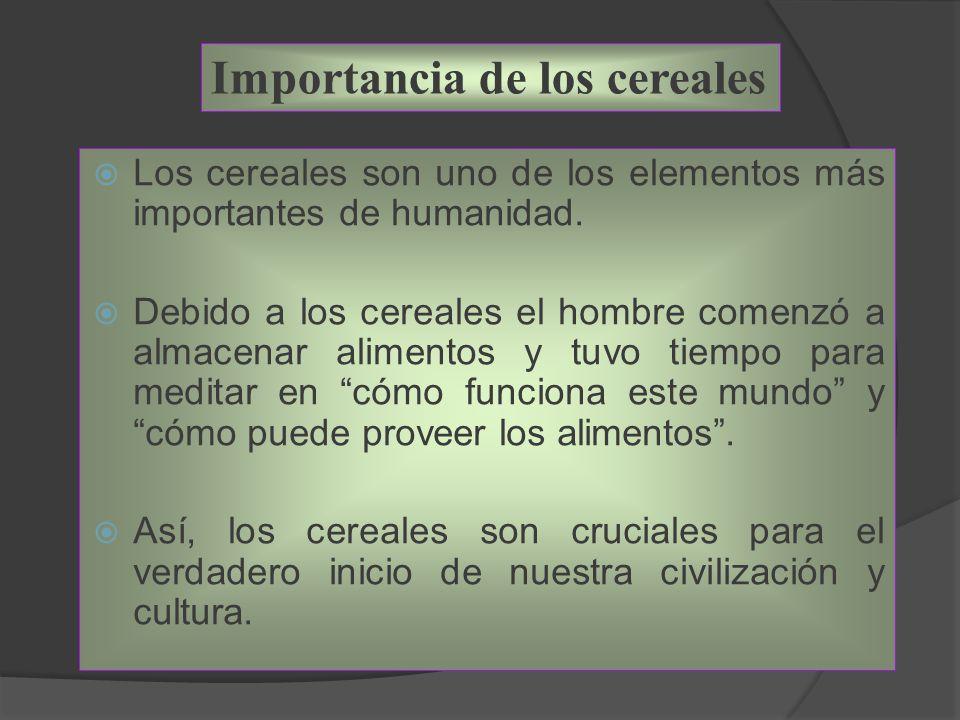 Importancia de los cereales