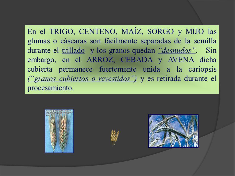 En el TRIGO, CENTENO, MAÍZ, SORGO y MIJO las glumas o cáscaras son fácilmente separadas de la semilla durante el trillado y los granos quedan desnudos .