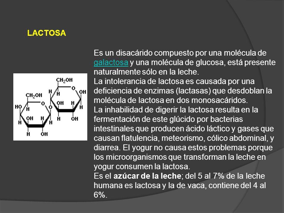 LACTOSA Es un disacárido compuesto por una molécula de galactosa y una molécula de glucosa, está presente naturalmente sólo en la leche.
