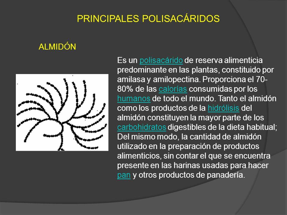 PRINCIPALES POLISACÁRIDOS
