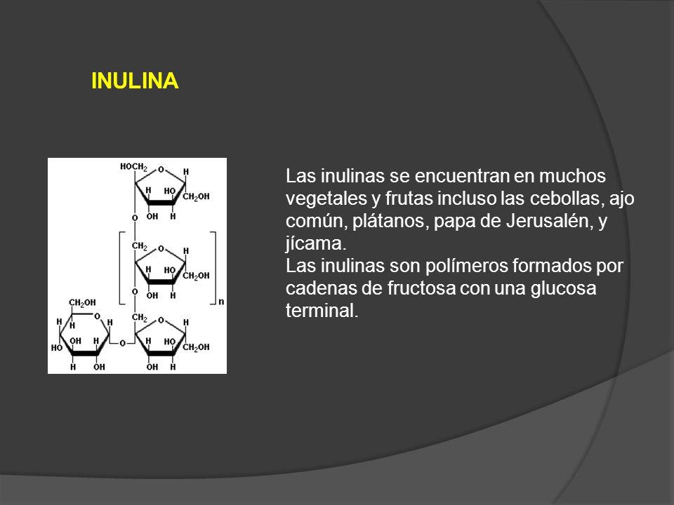 INULINA Las inulinas se encuentran en muchos vegetales y frutas incluso las cebollas, ajo común, plátanos, papa de Jerusalén, y jícama.