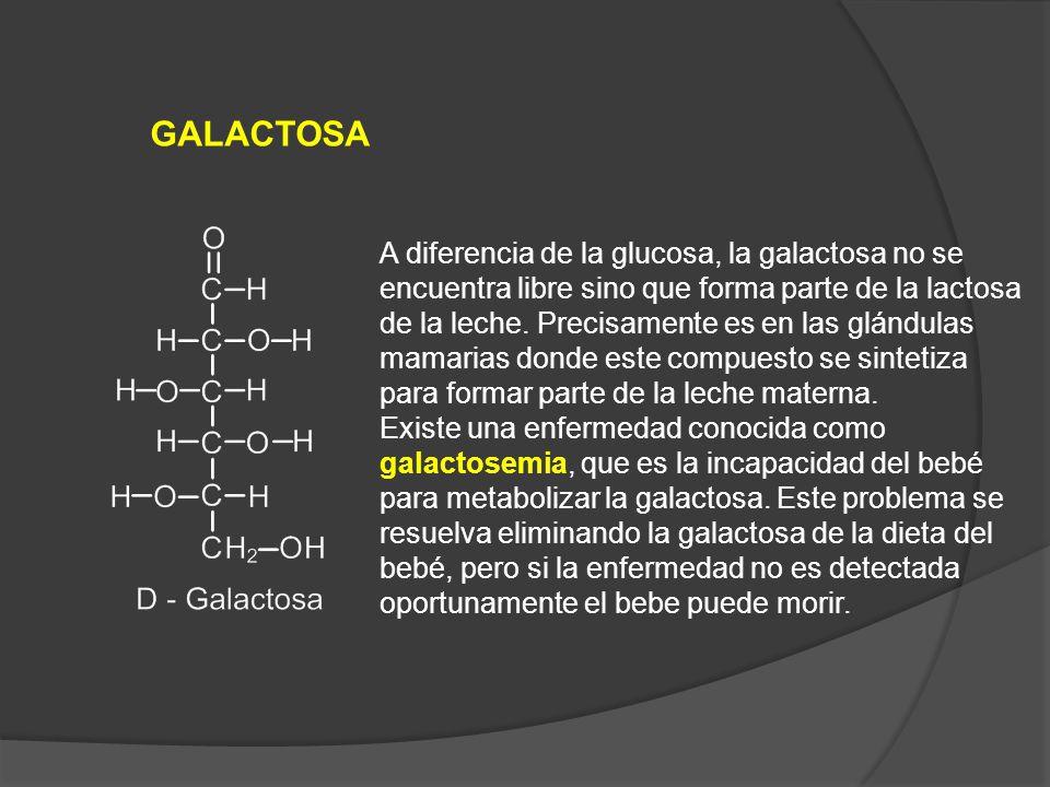 GALACTOSA