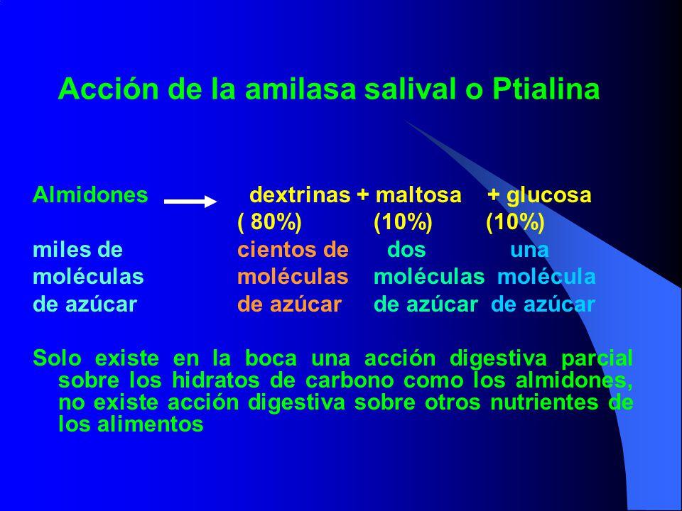 Acción de la amilasa salival o Ptialina