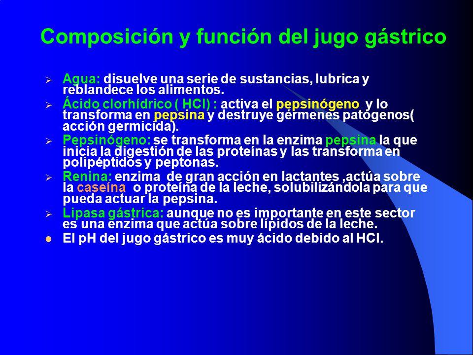 Composición y función del jugo gástrico