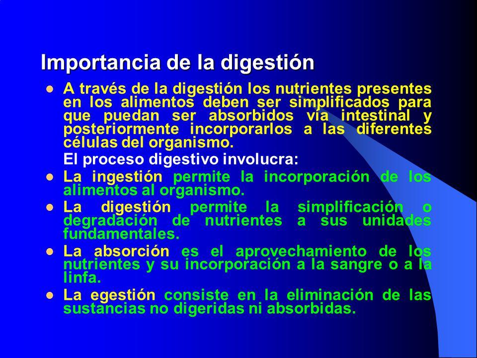 Importancia de la digestión
