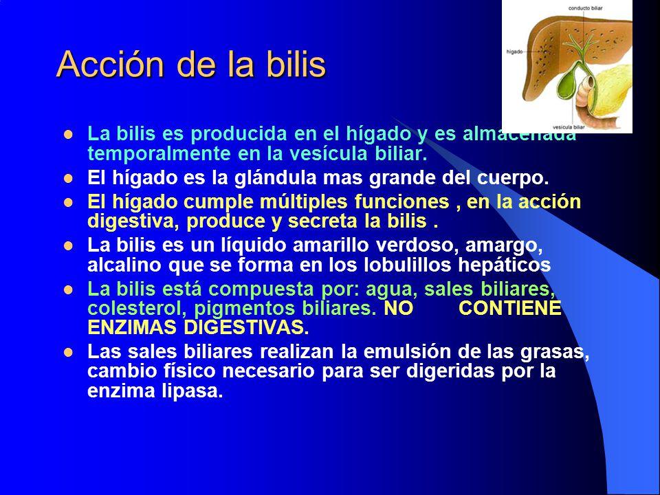 Acción de la bilis La bilis es producida en el hígado y es almacenada temporalmente en la vesícula biliar.