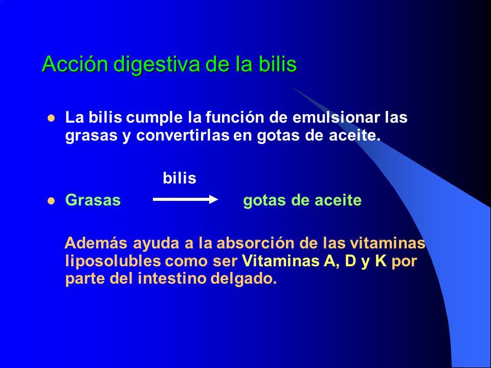 Acción digestiva de la bilis