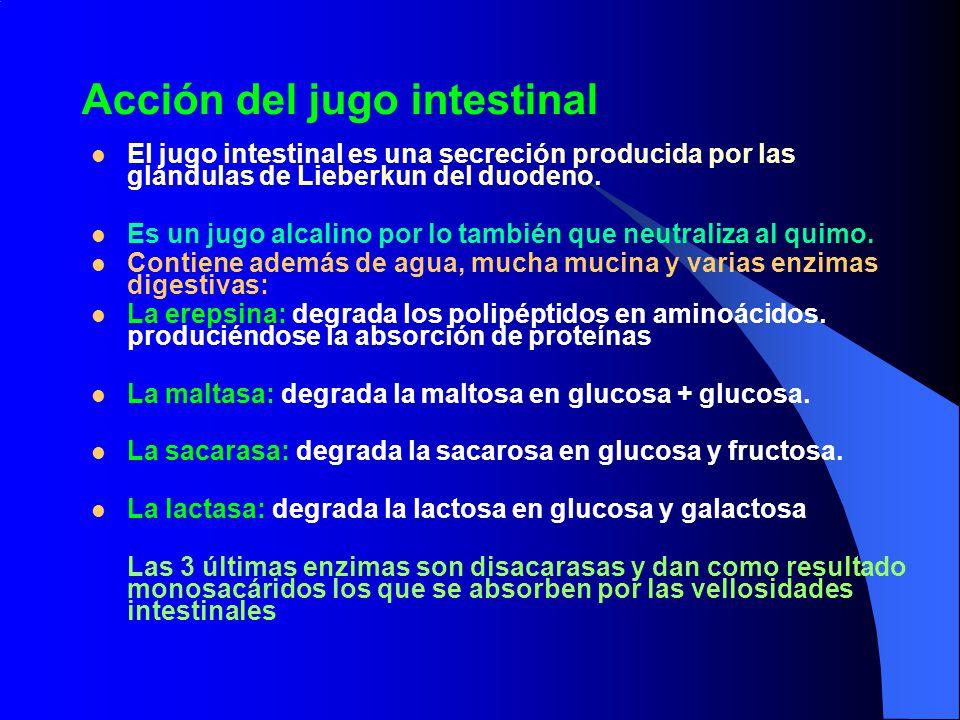 Acción del jugo intestinal