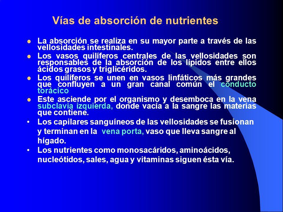 Vías de absorción de nutrientes