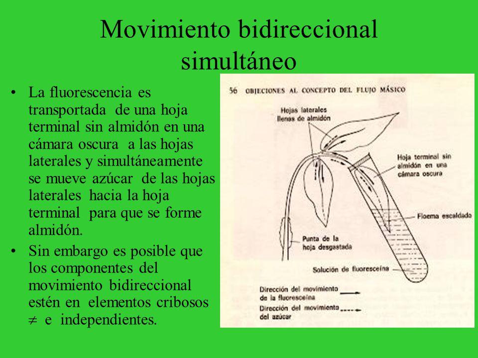 Movimiento bidireccional simultáneo