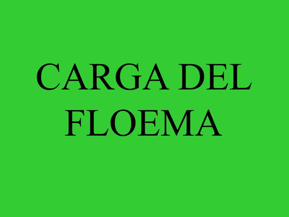 CARGA DEL FLOEMA