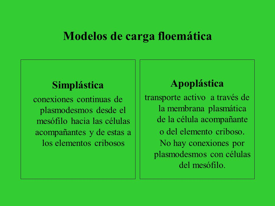 Modelos de carga floemática