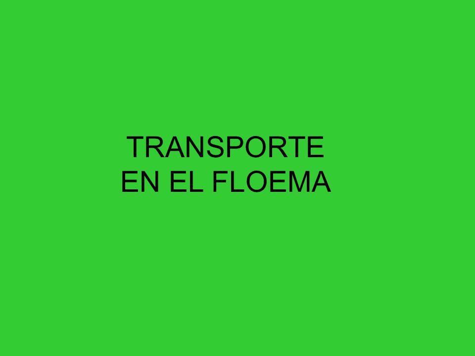 TRANSPORTE EN EL FLOEMA