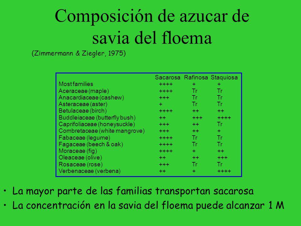 Composición de azucar de savia del floema
