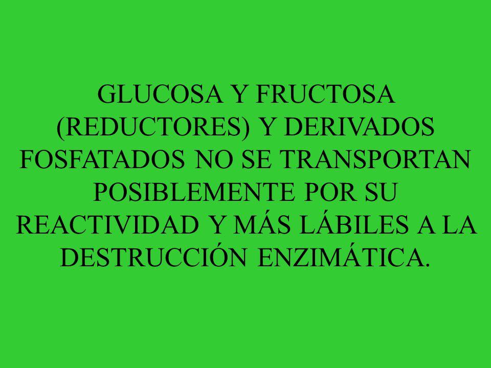 GLUCOSA Y FRUCTOSA (REDUCTORES) Y DERIVADOS FOSFATADOS NO SE TRANSPORTAN POSIBLEMENTE POR SU REACTIVIDAD Y MÁS LÁBILES A LA DESTRUCCIÓN ENZIMÁTICA.
