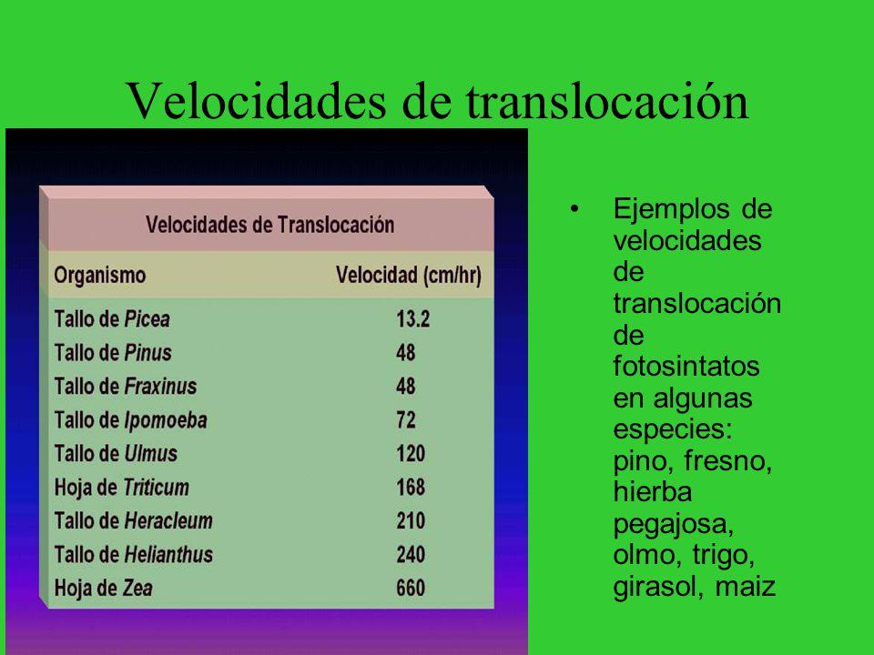 Velocidades de translocación