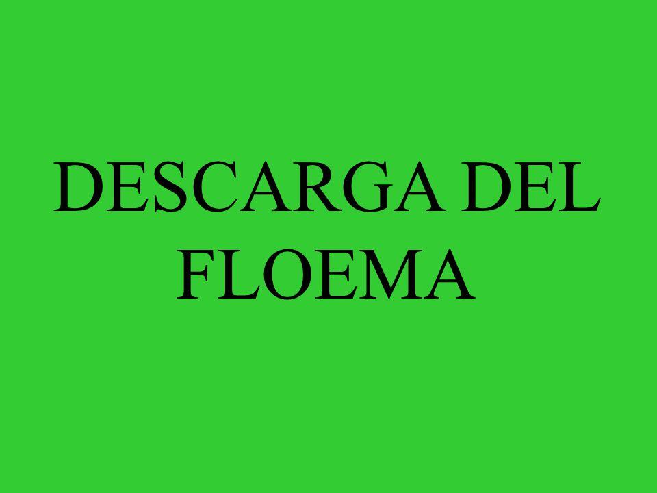 DESCARGA DEL FLOEMA