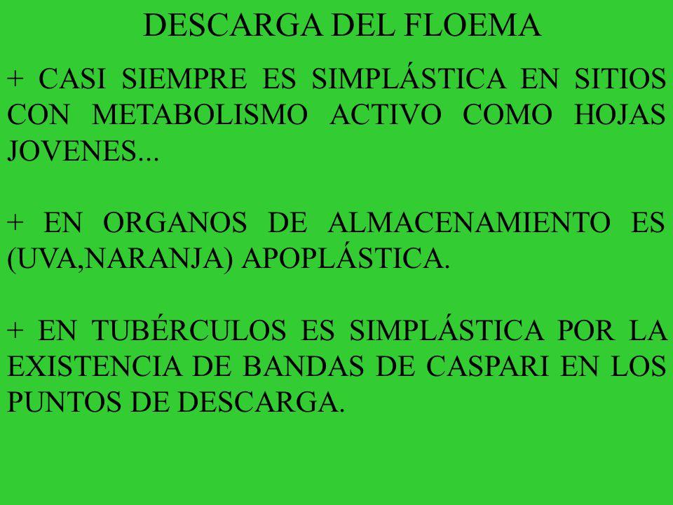 DESCARGA DEL FLOEMA + CASI SIEMPRE ES SIMPLÁSTICA EN SITIOS CON METABOLISMO ACTIVO COMO HOJAS JOVENES...